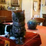 Pet and housesitters needed for 4 weeks from july 30 to August 26, 2013