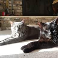 Two kitties needing some love!