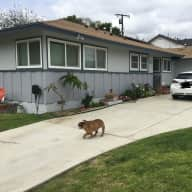 Looking for a House Sitter for July 2018 - Orange County, California