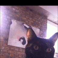 Flat + cat sit