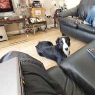 Pet Mystee our border collie and house sitter needed for holidays