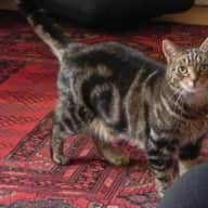 House/cat sitter wanted for about 6 weeks in June/July/August while I visit family abroad.