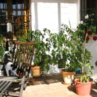 A week or so in a country cottage in Southern Andalucía, looking after 4 dogs, a horse, a cat and a few plants.