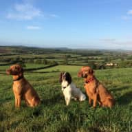 Just over a week on the Dorset/Somerset border looking after 3 dogs and 1 rabbit in a newly refurbished 3 bedroom house.