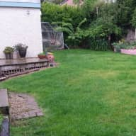 Two benign and affectionate dogs need company in the beautiful heritage  village of Dalkey.