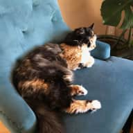 House sitter for loving pets