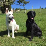 Pet sitters needed for 2 dogs and a cat this July