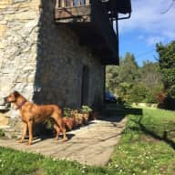 A rural house in beautiful Asturias with 3 dogs and 4 hens