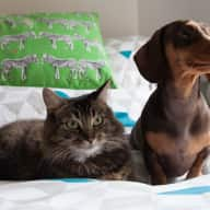 Wandsworth, London with two mini dachshunds and two cats!