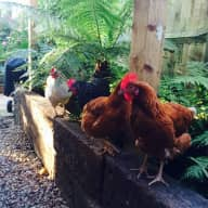 Pet sitters needed for 3 weeks over Christmas, Heathfield East Sussex