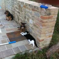 Pet sitter needed for two smallish dogs and 2 cats