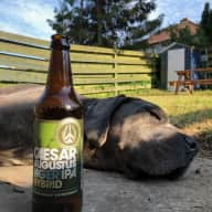 Italian Mastiff looking for a summer friend