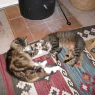 sitter required for two cats (8 and 13) , several plants  and a house