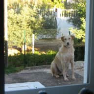 House sitter/dog sitter required.    Situated in the beautiful Algarve.