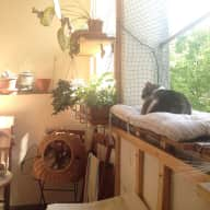 Cat sitter in Neukölln in beautiful 2 bedroom apartment