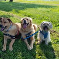 Care for the three cutest dogs in Germany!