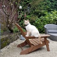 Caring sitter needed for 3 lovely cats in the heart of Esher, Surrey.