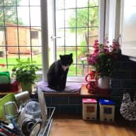 Cat sitting in London (South East, Greenwich borough)