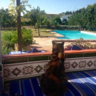 Dog and cat sitters for Estepona country house 1.5k from beach 2k from town