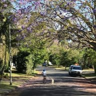 Dog-friendly sitter wanted for house near bush & river only 15km from Brisbane CBD