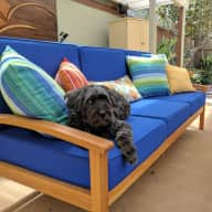 Dog Sitter Needed in Sunny Southern California