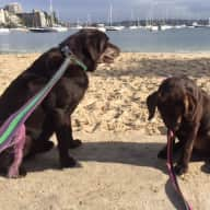 Two Dogs, Double Bay