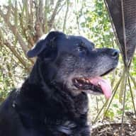 Lincoln UK - Milly & Boyzee dog, Saffy, Cookie and Alfie cats looking for love and company!