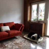 Zorzon is looking for a dog-sitter in his home in central Rome!