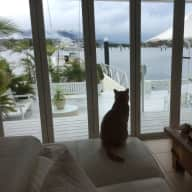 World Heritage Area of Tropical Far North Queenland, 2 cats