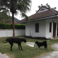 The crazy dog house !