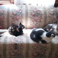 Cats, cats and more cats, 6 to be exact (2 inside/outside females and 4 friendly ferals, two male and two female.