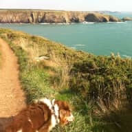 Pet sitter needed for Harold the Bulgarian Barak and Tiggy the cat in Beautiful Pembrokeshire