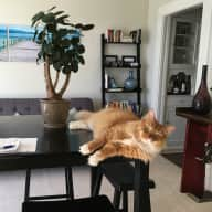 Housesitter Needed for SF Apt with Gentle, Cuddly Cat