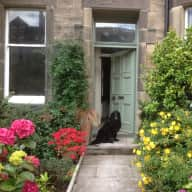 Pet sitter requested for black flat-coat/german shepherd cross from approximately 6th December to 9th January