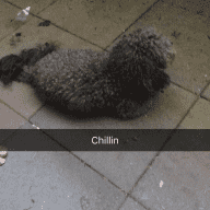 Apartment in Kitsilano and a small fluffy dog