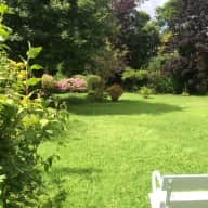 Caring sitter(s) needed for 2 lovely cats and old fashioned house and garden  in Blackrock, Co Dublin
