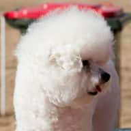 Sitting of our house and 2 Bichon's while we are away. looking for sitting across a few days to a number of weeks throughout the year