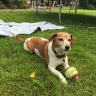 House and pet sitting needed over the  Summer 2018