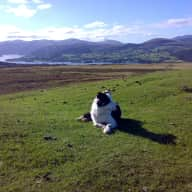 Help!! We have been let down by our arranged sitter and urgently need someone to house/pet sit from 21st March - 19th April in the beautiful Northern Lake District with a Border Collie and 2 cuddly cats.