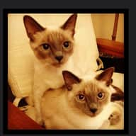 2 sweet cats in a lovely spacious condo in the heart of San Francisco
