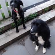 Two loving dogs in need of kind carer