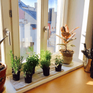 Take care of our kitties and enjoy beautiful Munich in our spacious apartment!