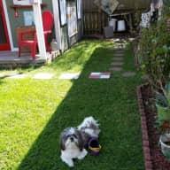 Dog/house Sitter Needed
