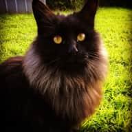 Newport Cat sitting