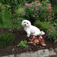 Bertie is looking for a loving companion