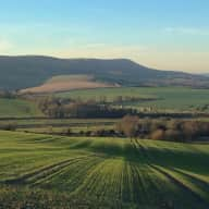 Spend Christmas in the beautiful South Downs National Park, with my lovely cat