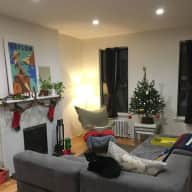 Enjoy a fabulous Brooklyn Christmas with an independent kitty