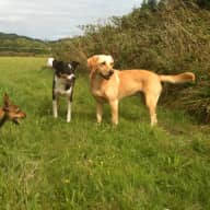 Pet and house sitter required for three dogs, three chickens and occasional horse! Also a cottage available for three months stay through the winter