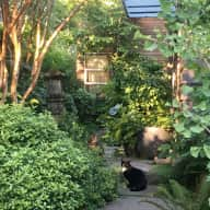 Madrona, Seattle sanctuary Home and 2 cats Housesitting