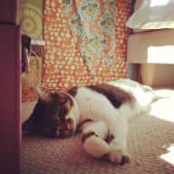 Cat sitter needed for short periods or occasional breaks